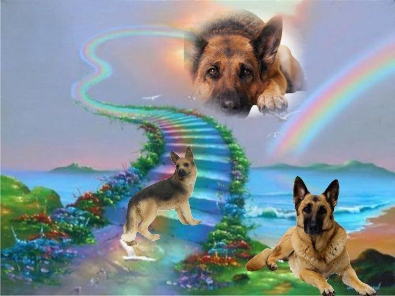 Открытка смерть собаки