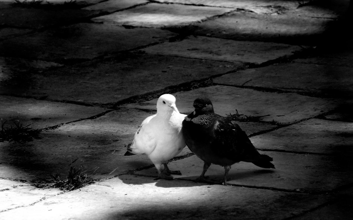 еще яму черно белые картинки со смыслом жизни брянска адреса