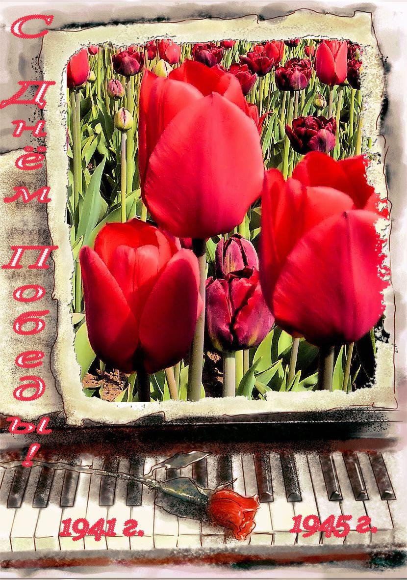 Музыкальные открытки все о тюльпанах