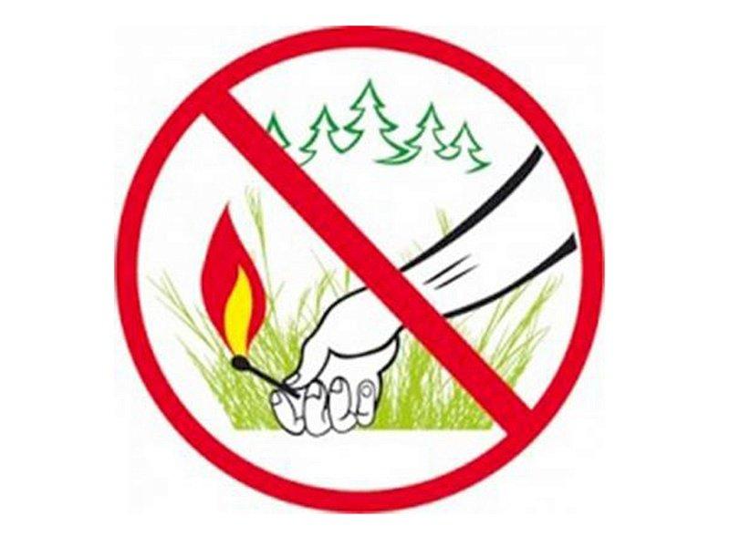 Картинки знаки леса