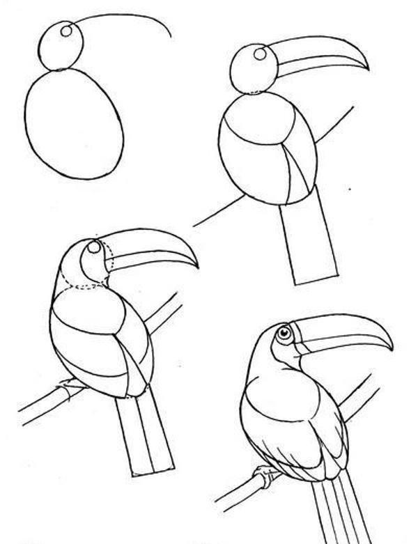 отслеживала рисунок птицы карандашом поэтапно картинки гордостью показывает тщательно