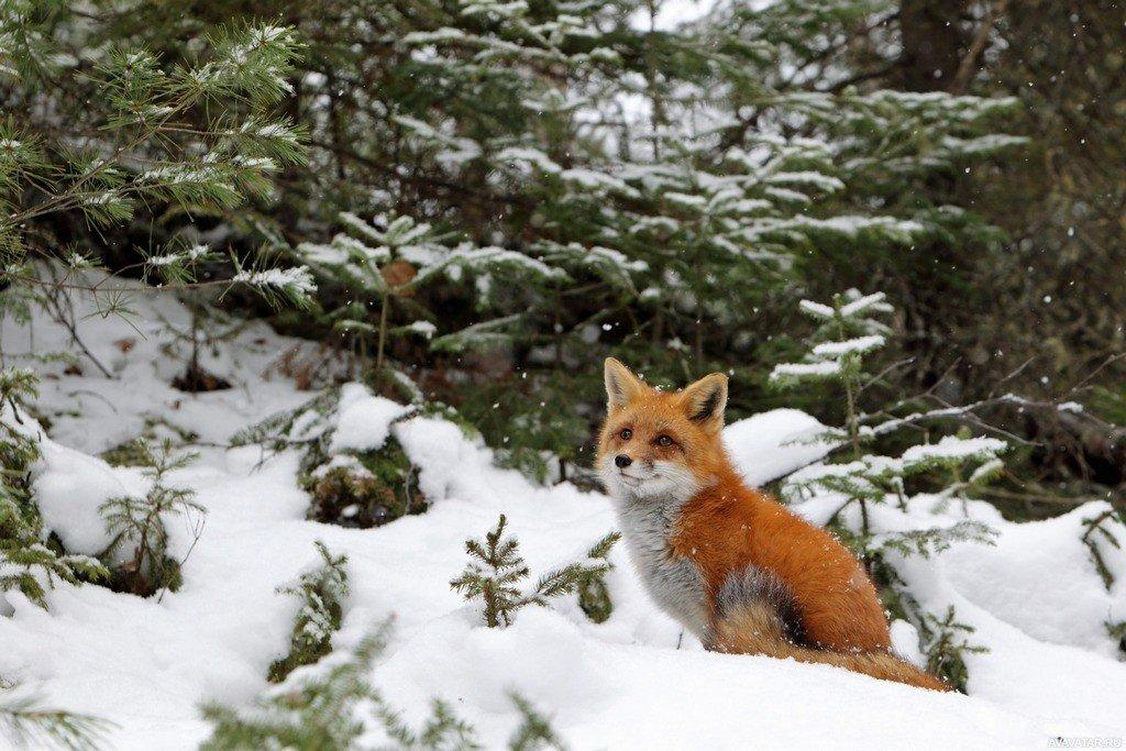 выбор моек картинки животных в лесу зимой новый