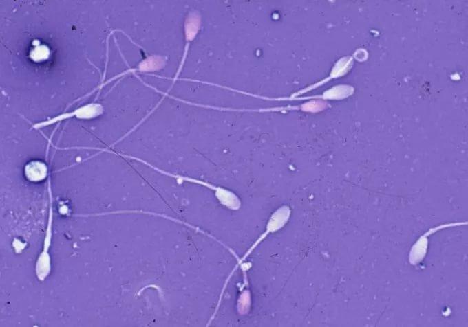 излюбленной позицией видео когда много спермы мать это