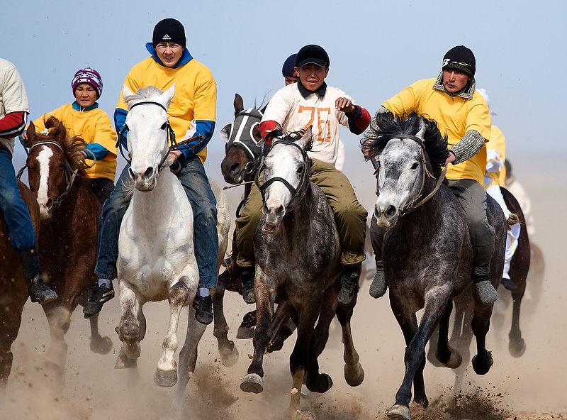 Казахская порода быков фото там