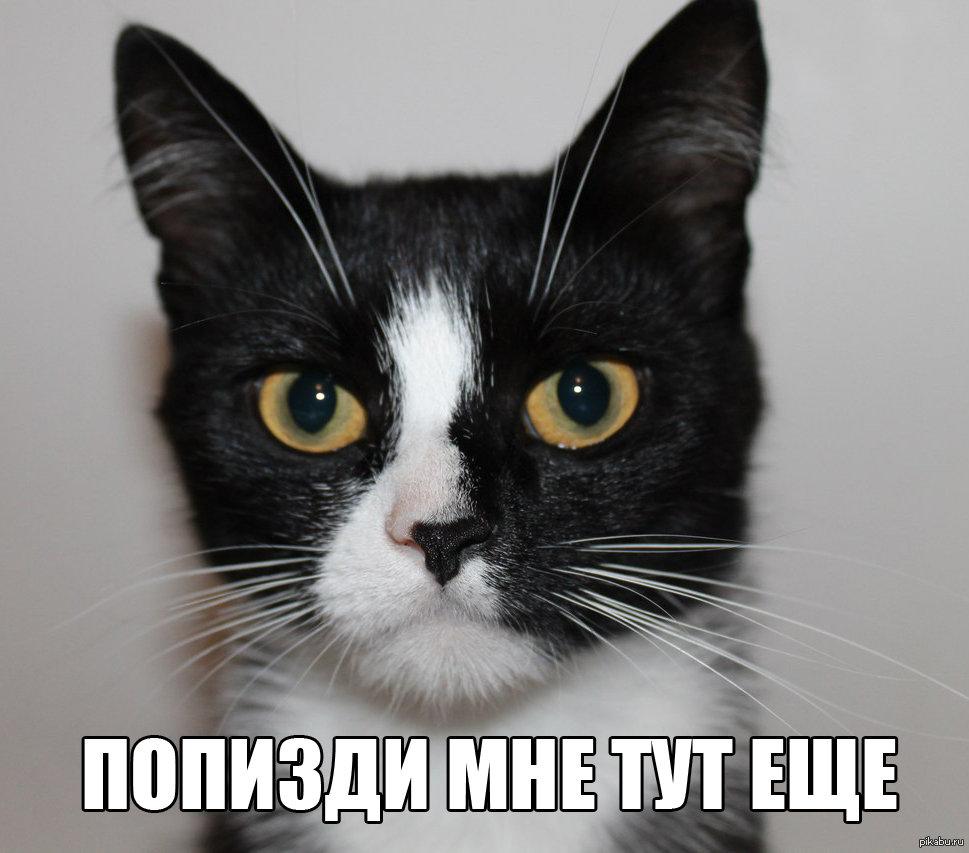 коты с матом мемы свое
