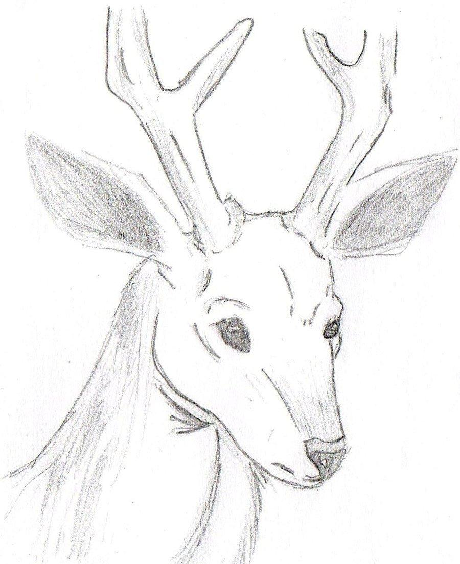 Картинки для срисовки легкие и красивые олень