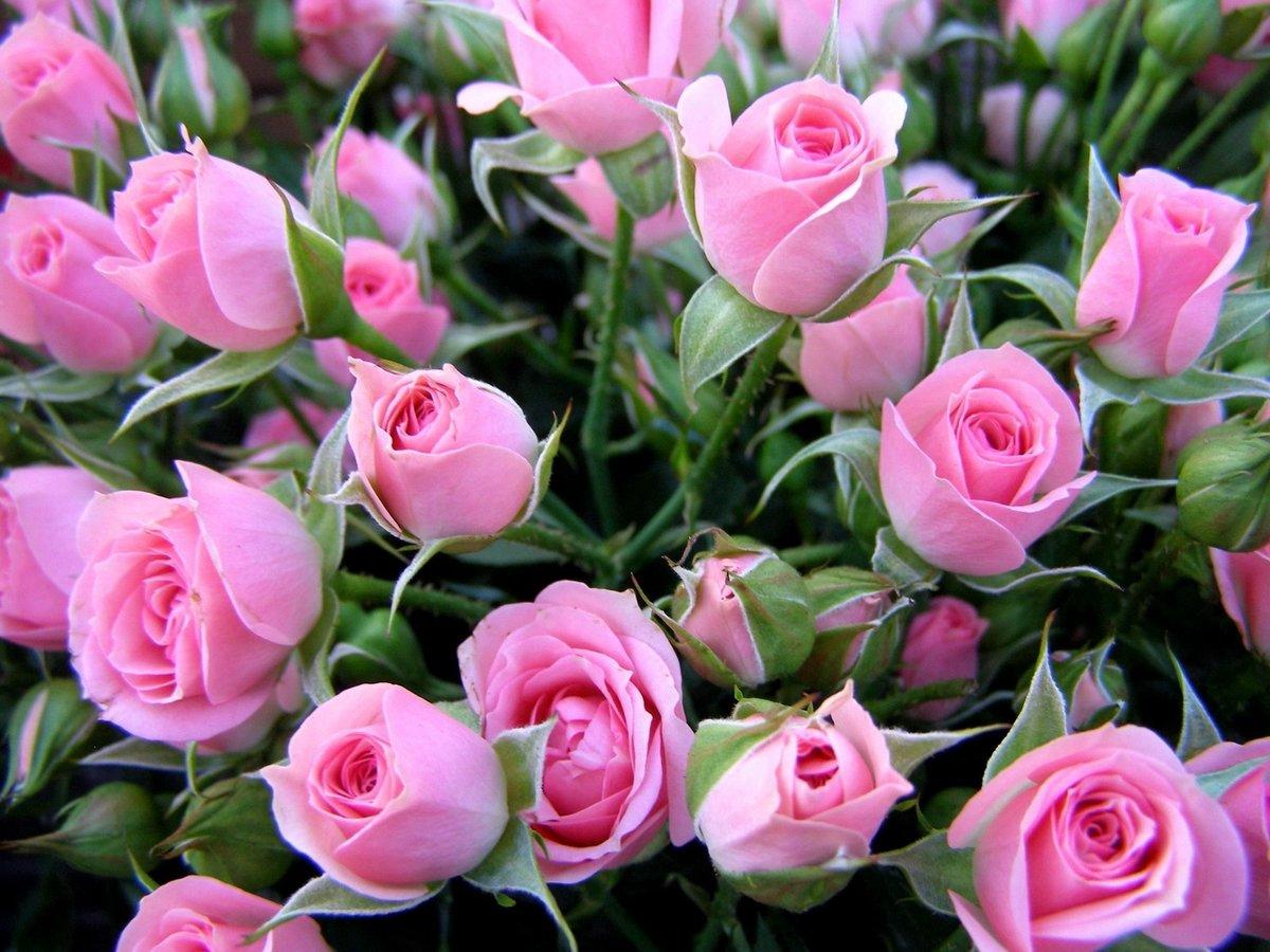 Цветы для поздравления с днем рождения фото картинки