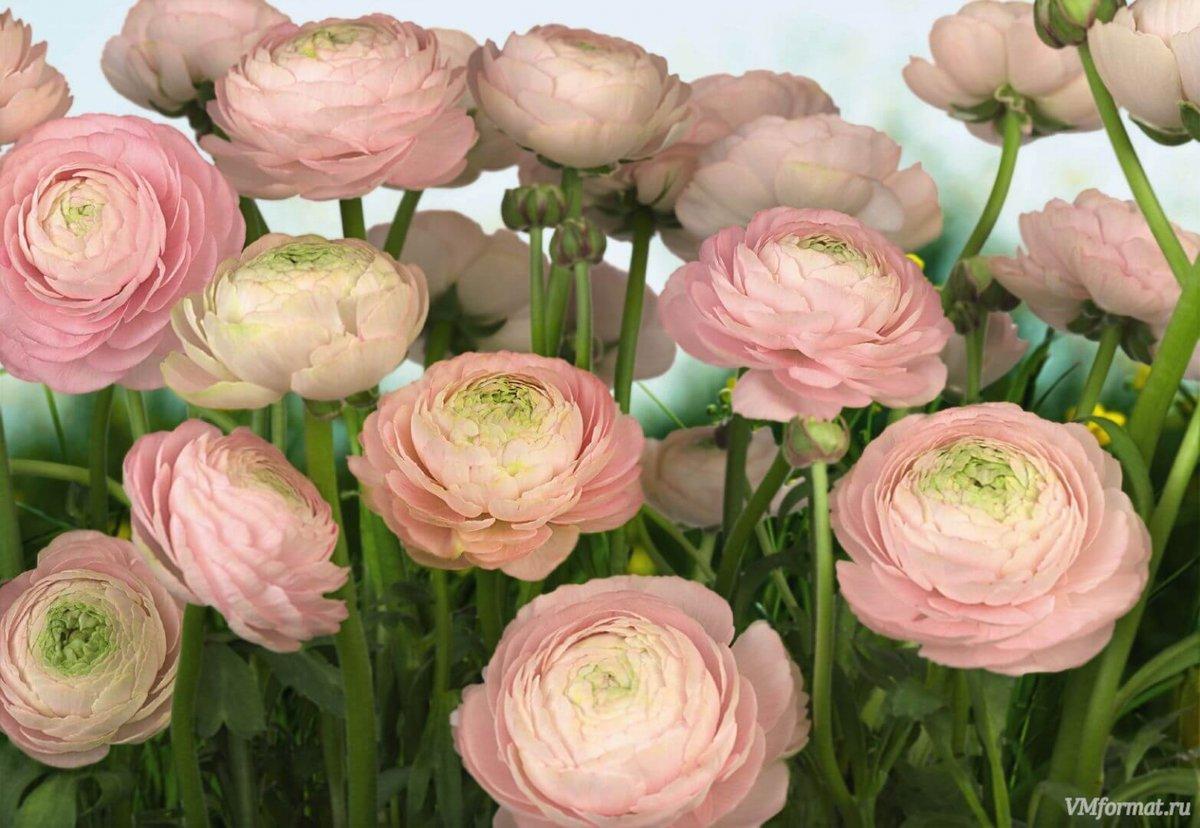 Букеты, цветы пионы интернет магазин