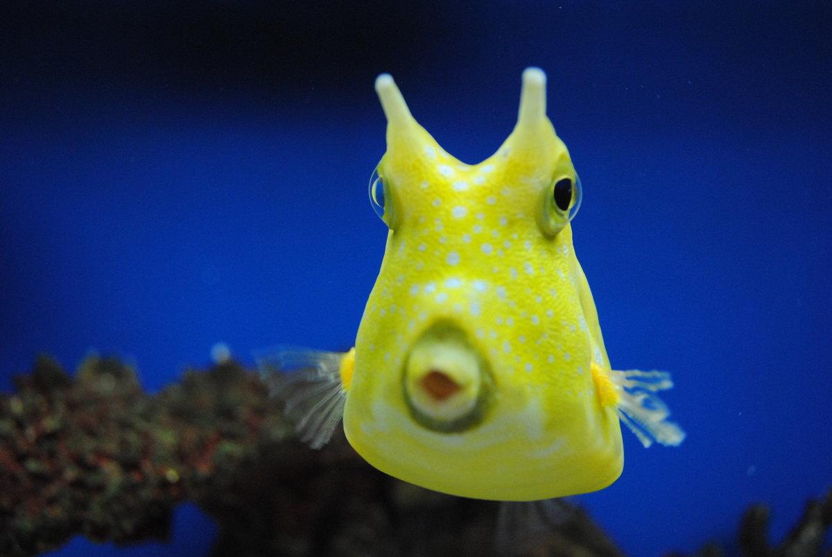 сухом смешная картинка рыба в аквариуме рационе