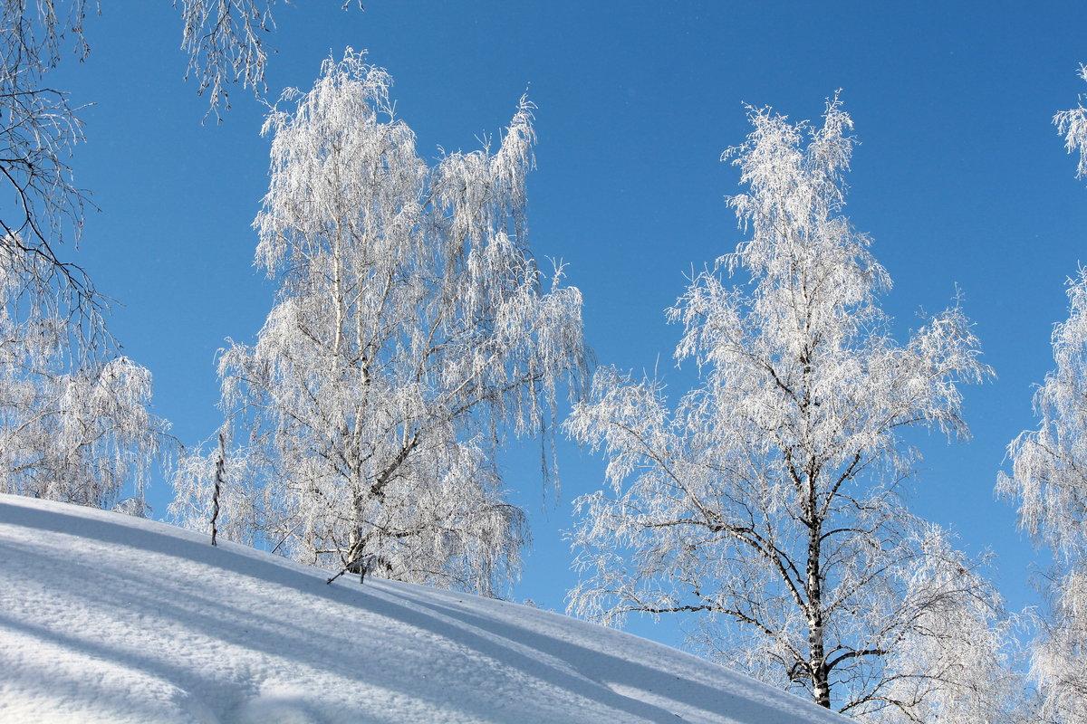 защитит зима картинки березы балка