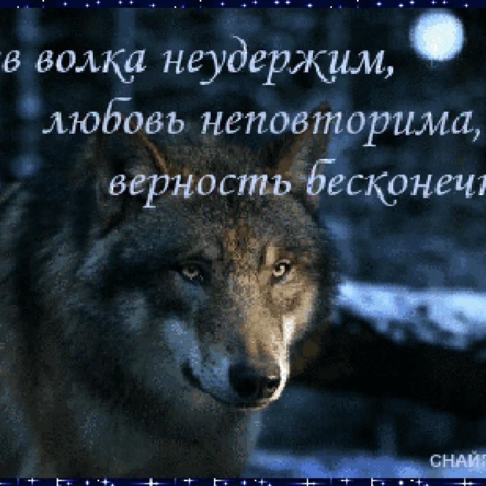 Картинке волка и надписи