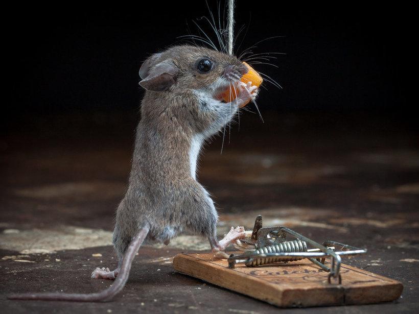 Приколы картинки крысы давно