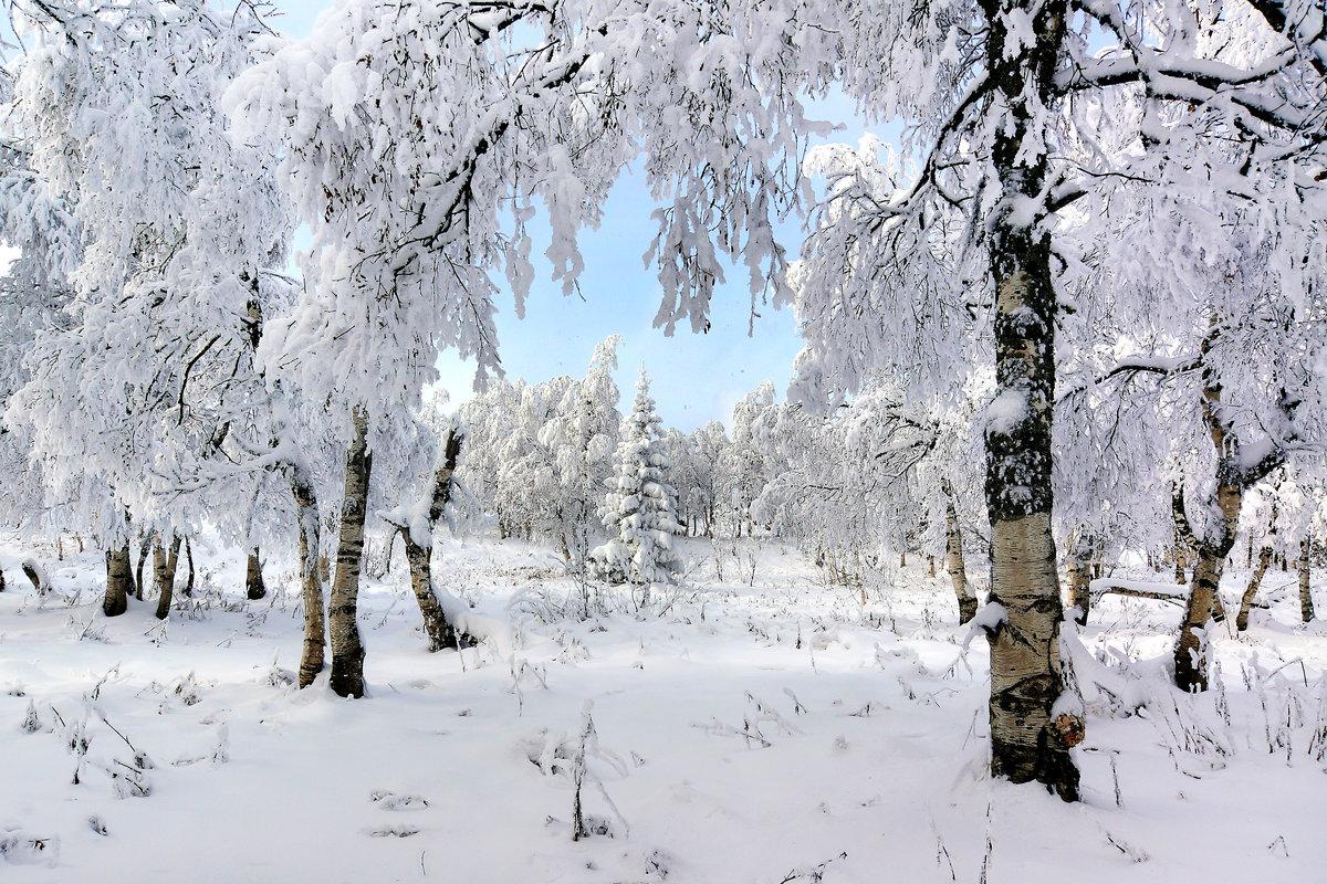 только выполняют картинки зима на урале артист