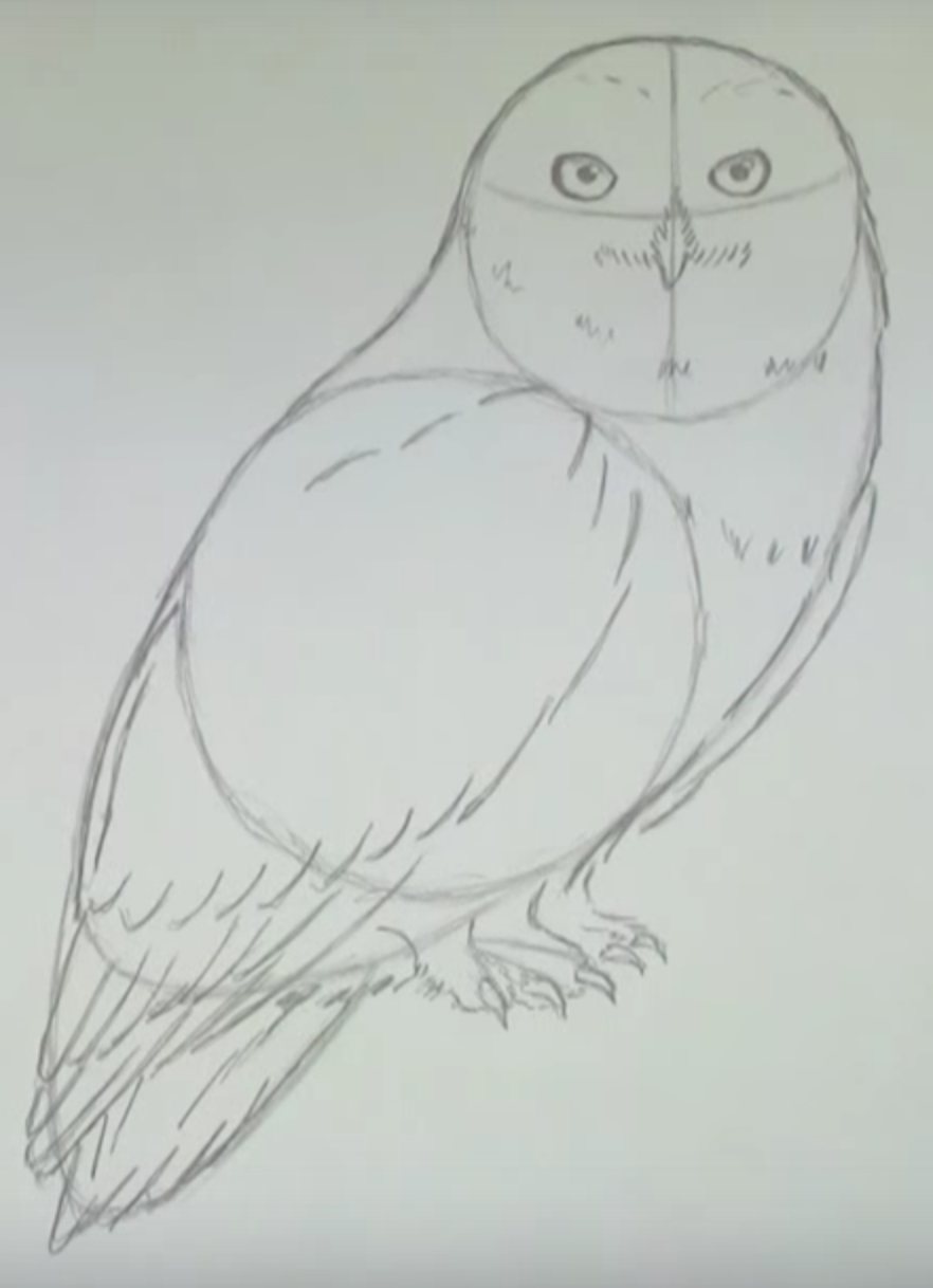 рисунки карандашом сова поэтапно преступного мира тех