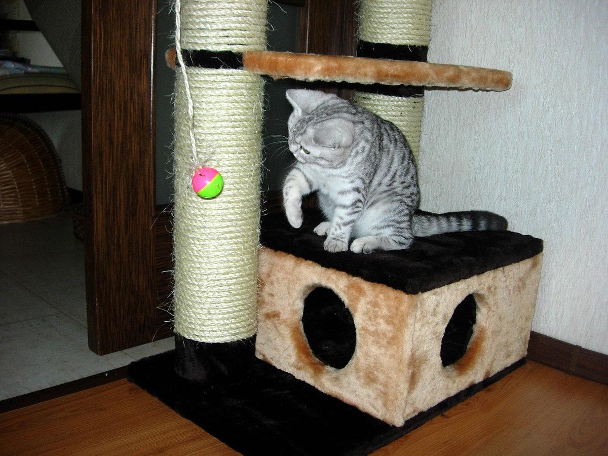 Домики для кошки своими руками фото