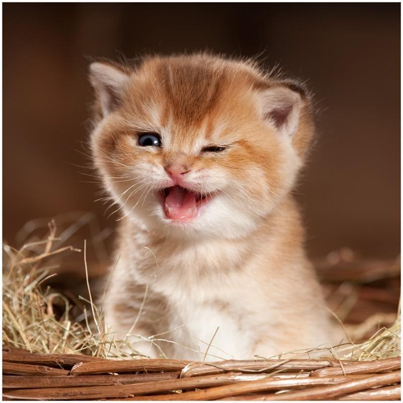 Прикольная картинка с котенком, тигров