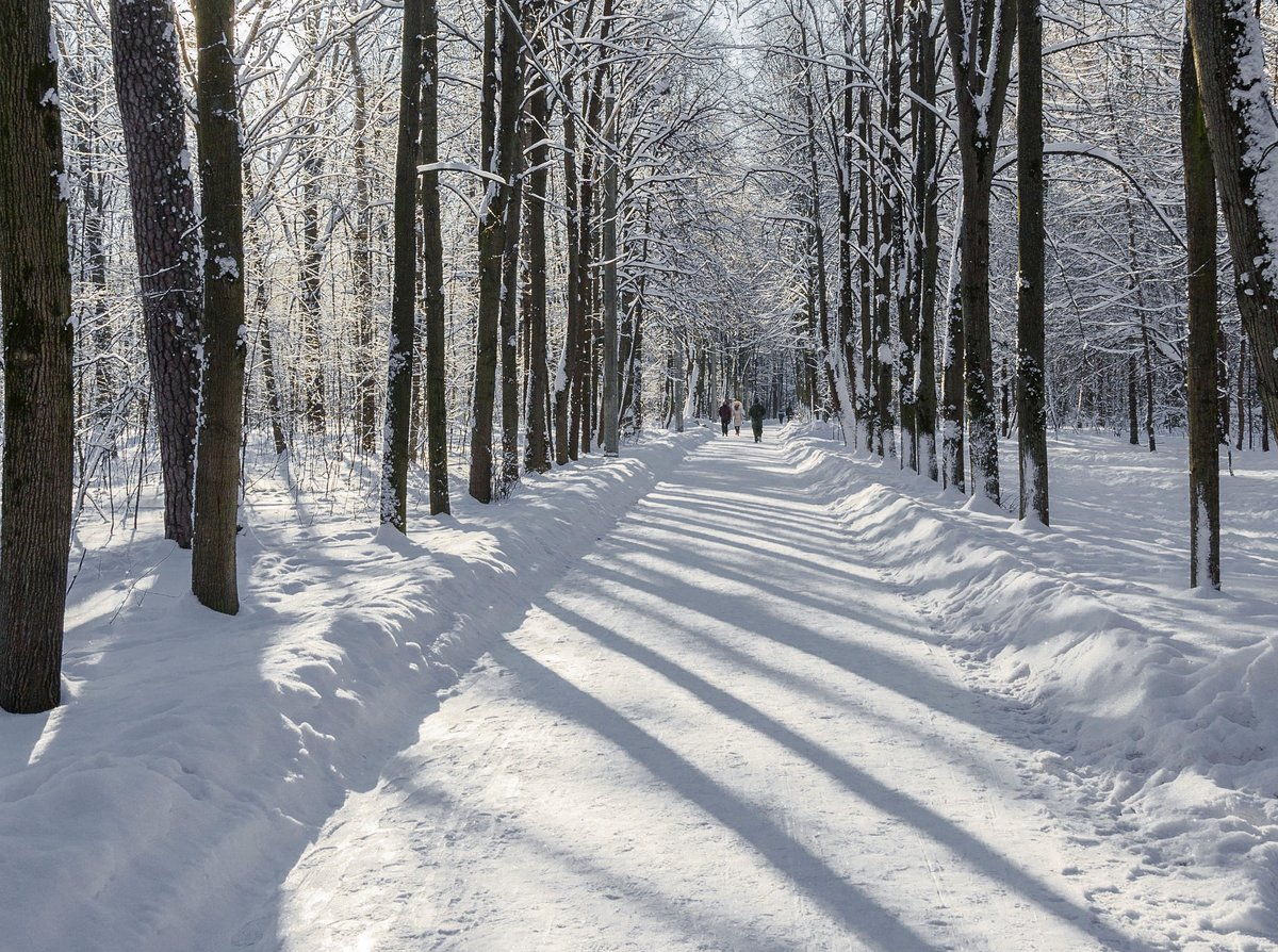 картинки зимнего парка челентано великий актер