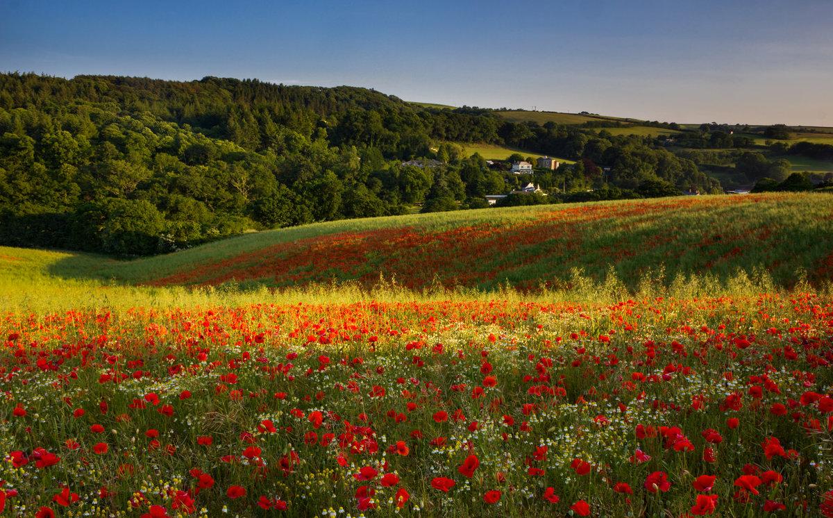 цветочное поле фото и изображение