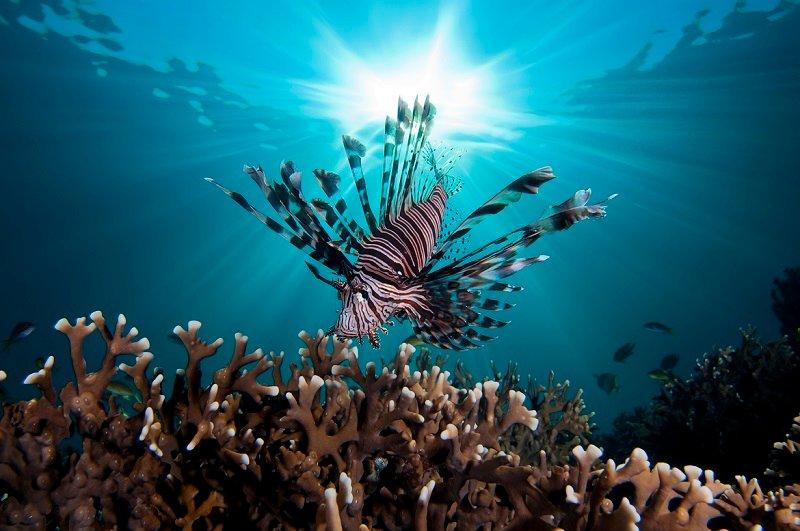 картинки с подводными чудес запросу микрофоны