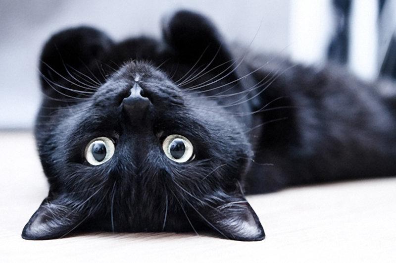 Смешные картинки черных котов, воскресенье выходной