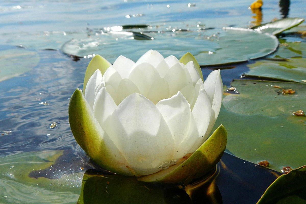 Фото в лепестках цветка для фотомонтажа галстук
