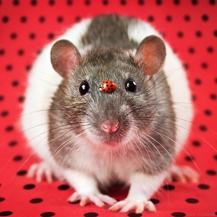 День, картинки с кодом для форума мышь