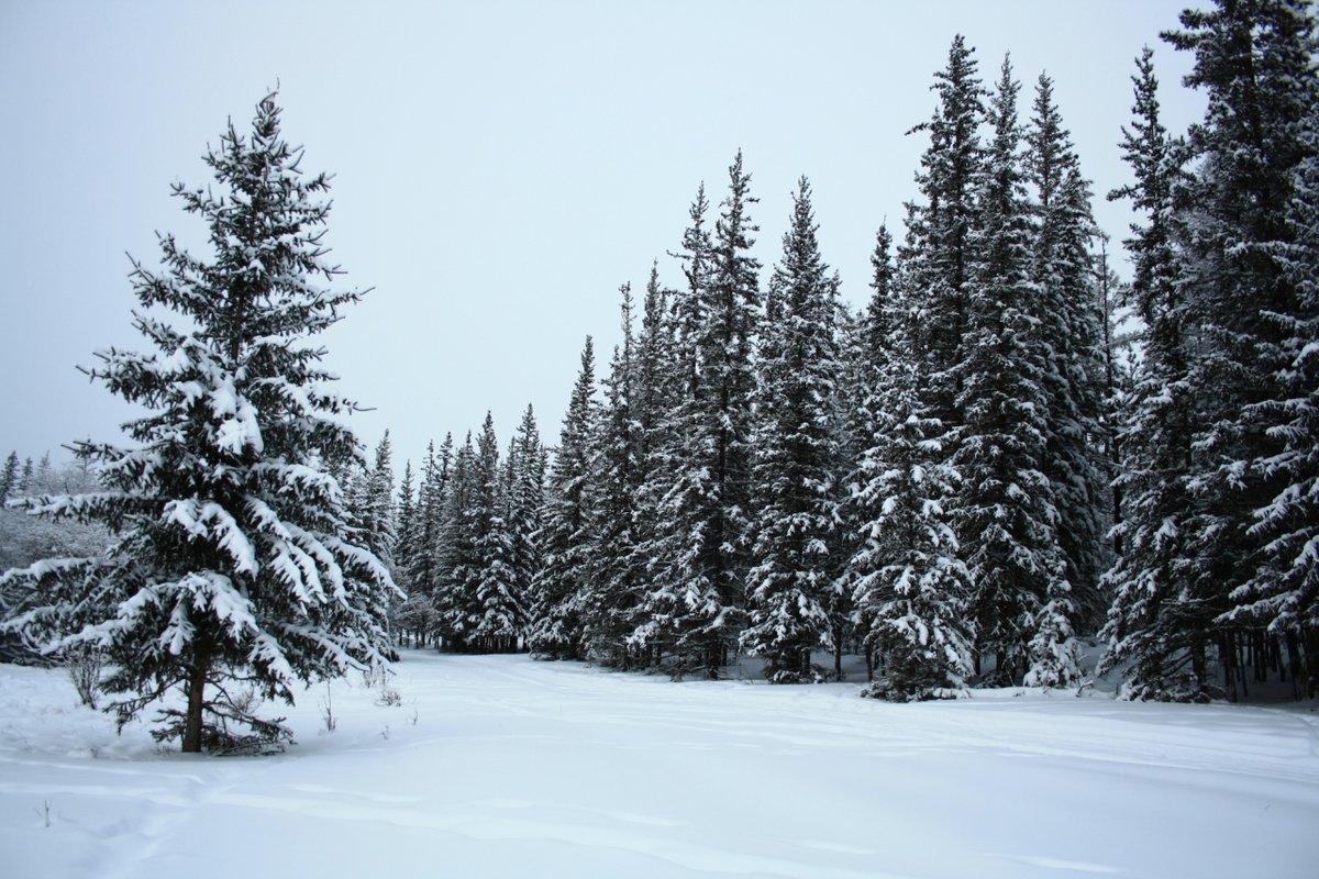 картинки елочек зимой замечательно