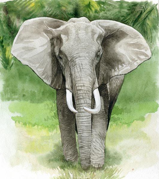 Картинки со слонами нарисованные