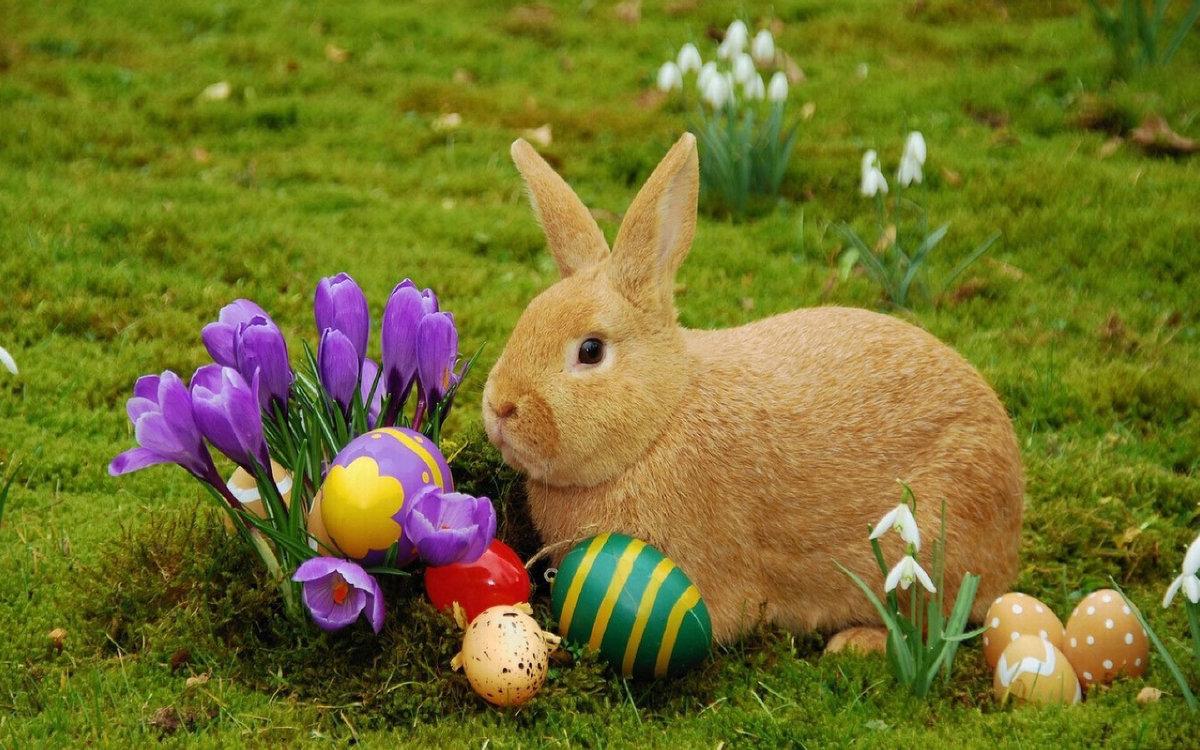 Картинка кролика пасхального