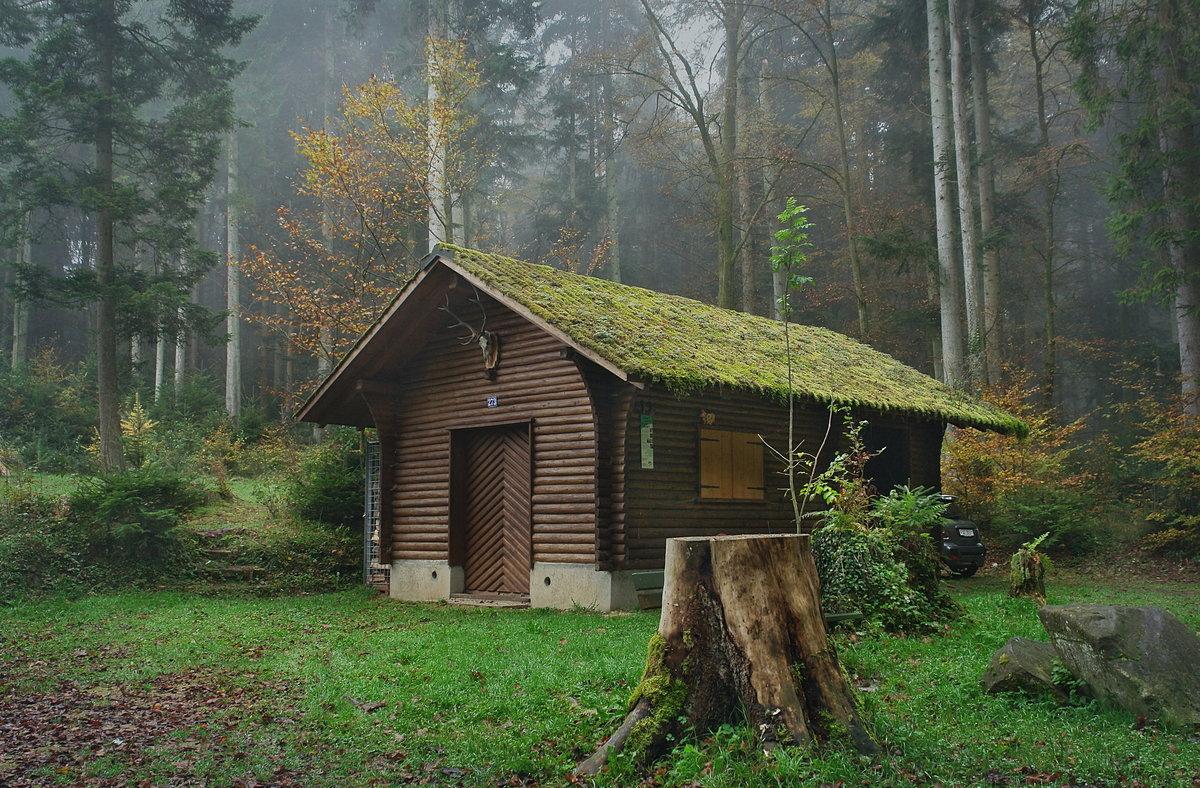 Открытки, картинка с избушкой и лесом