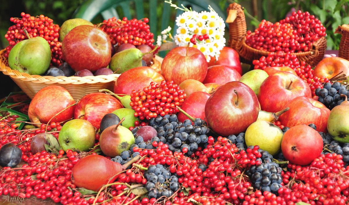 картинки фруктов из библии пиджак