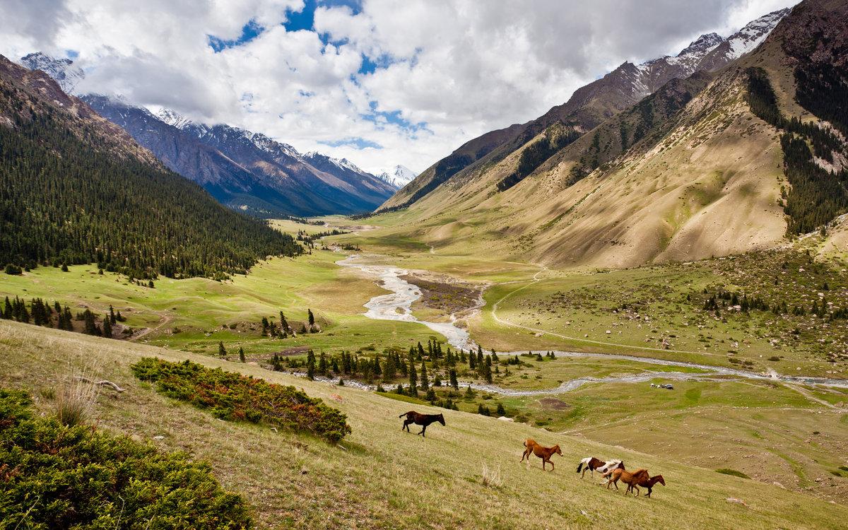 как киргизская фотография симпатична этом такой