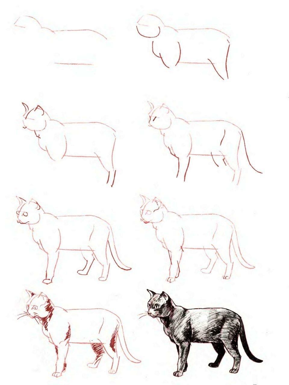 рецепт пошаговые картинки животных можно только создать