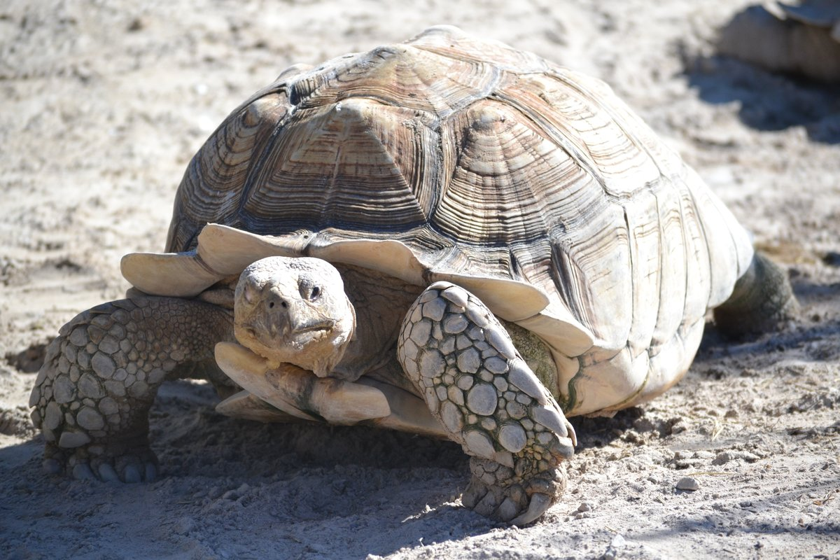 Месяцами внуку, черепахи картинки фото