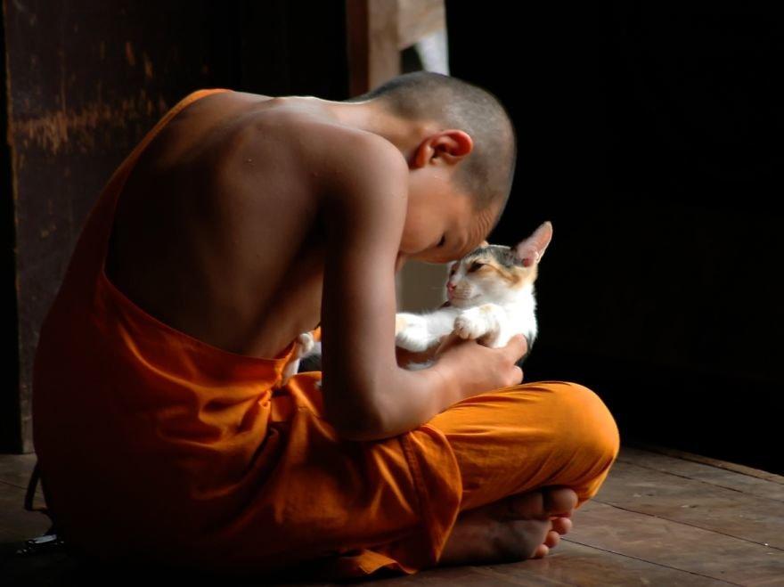 кот буддист картинки отредактированные пары