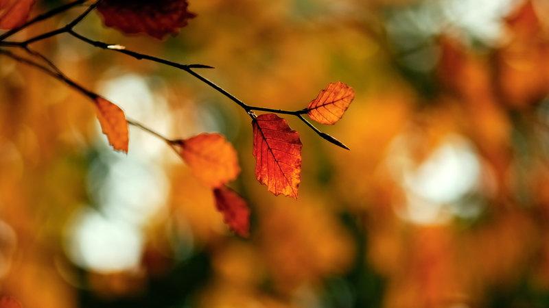 ветка, листва, осень