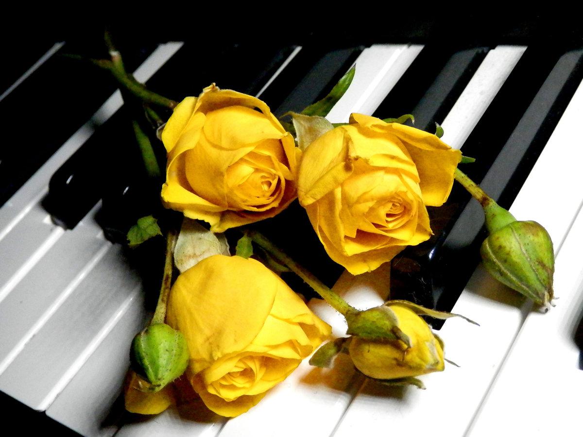 Днем, видео открытки с цветами музыкальные