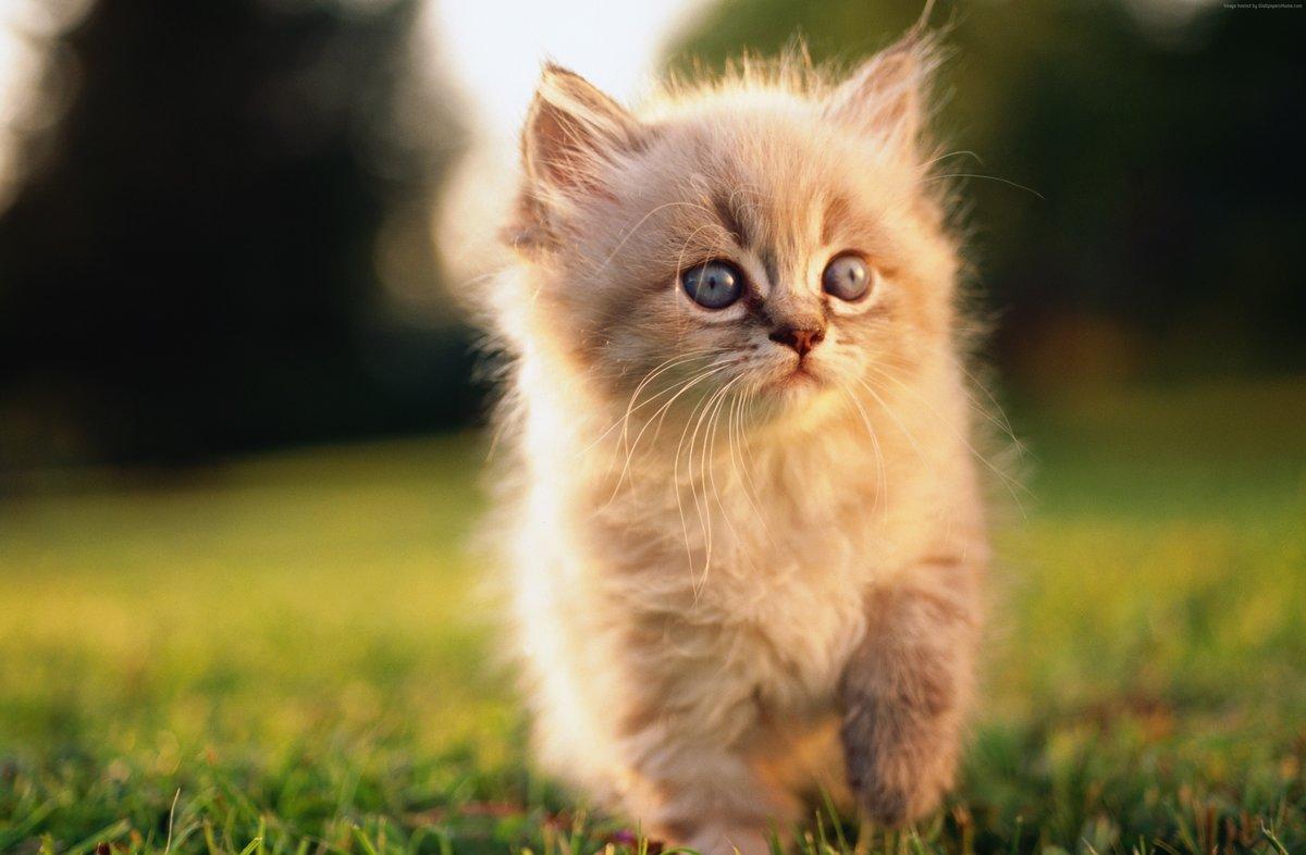 Для, животные смешные котята