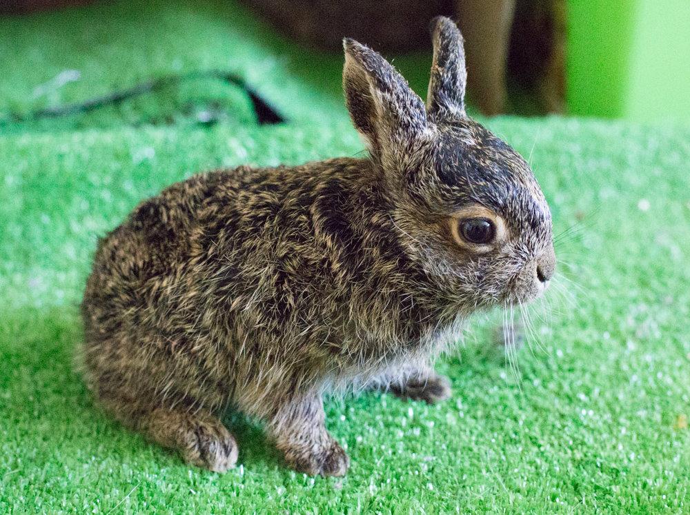 основе картинки маленькие заяц является одной самых