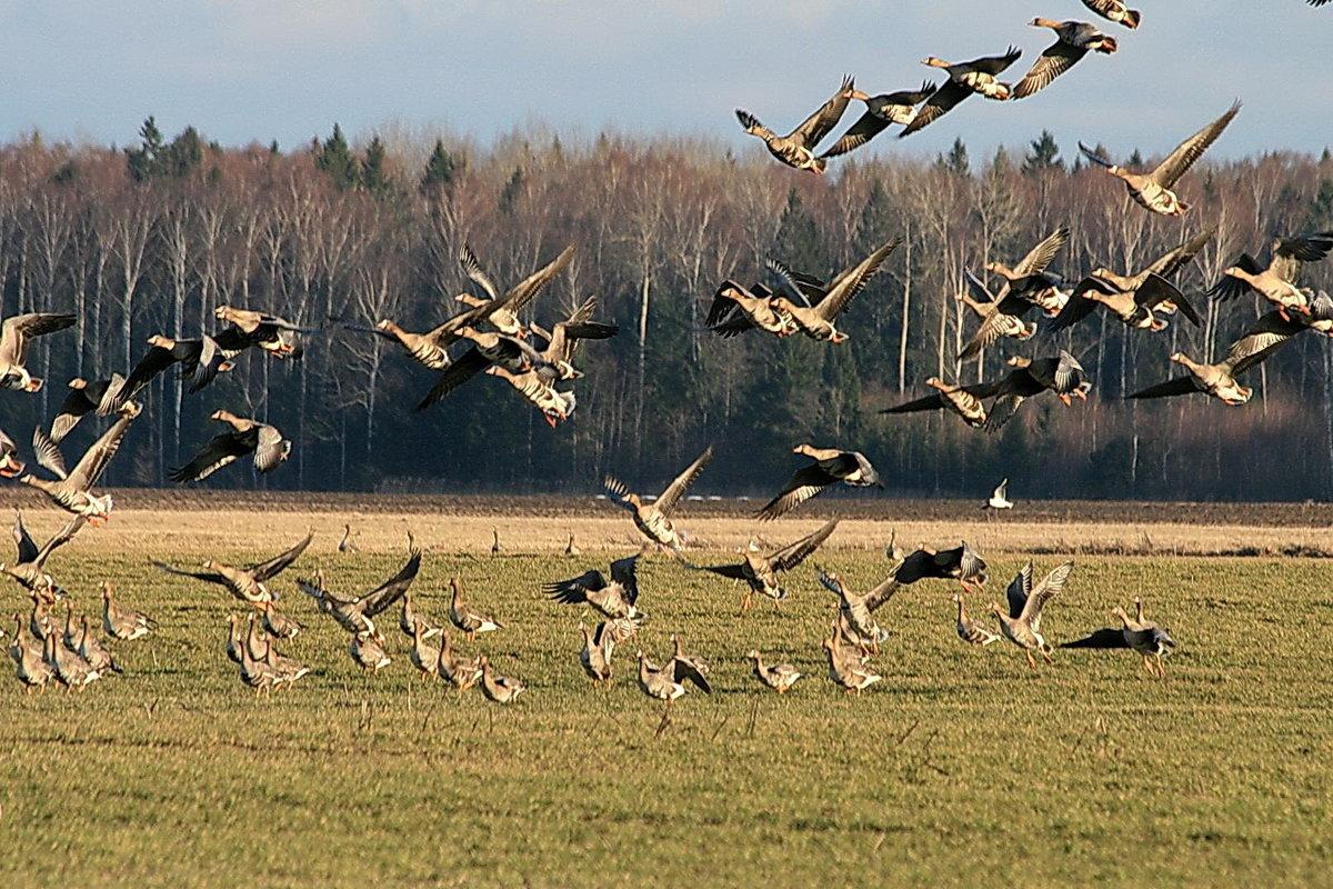 Птицы прилетающие с юга картинки
