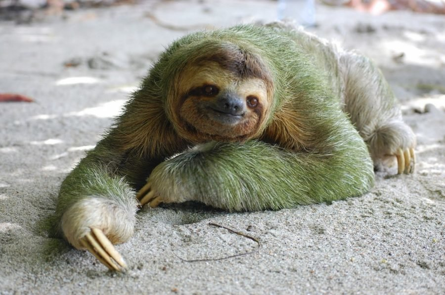Картинки ленивцев прикол