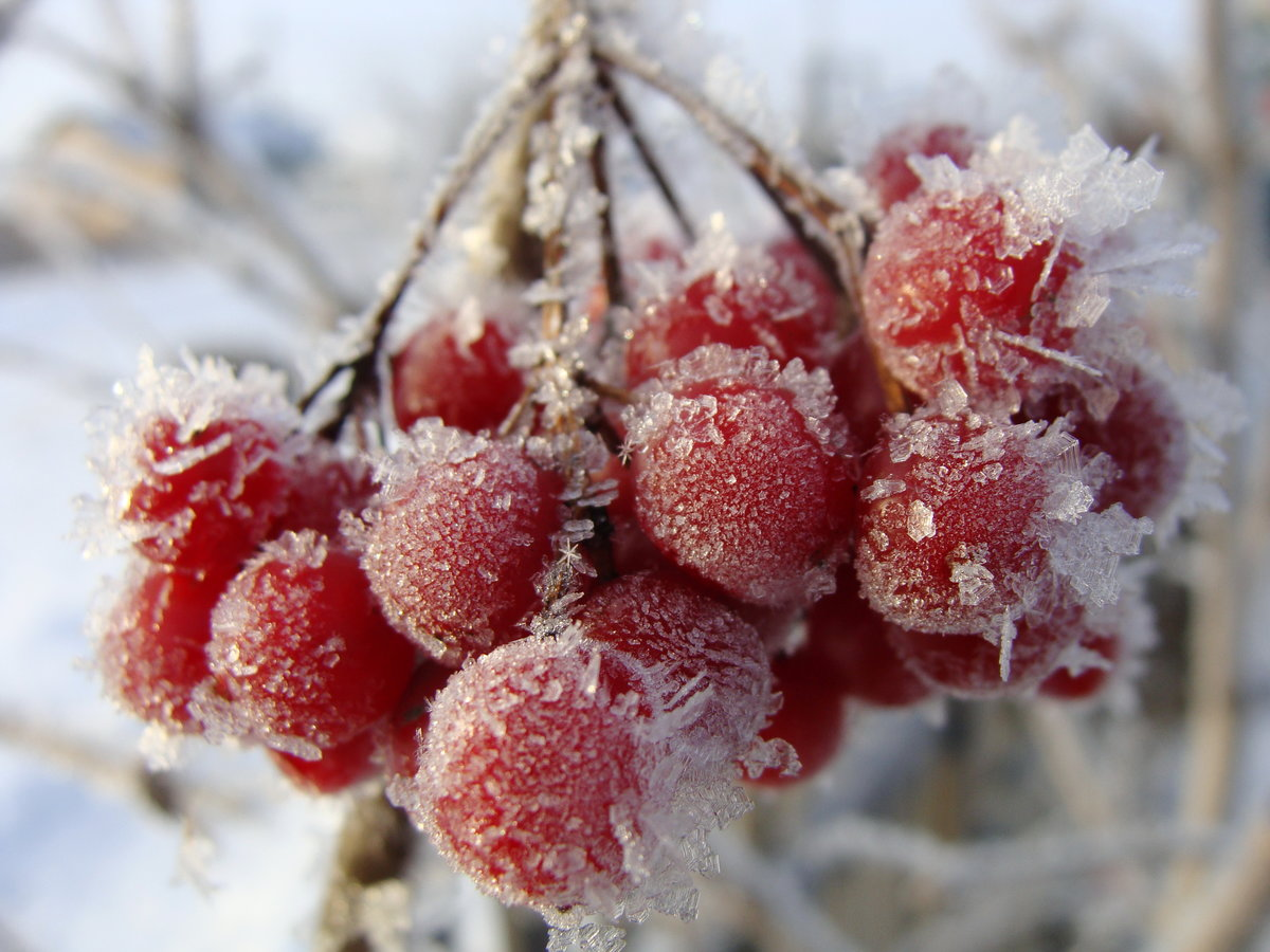 морозное утро картинки прикольные задумки, идеи