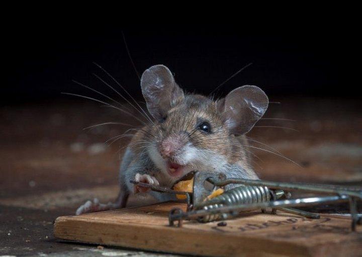Картинки прикольные с мышкой