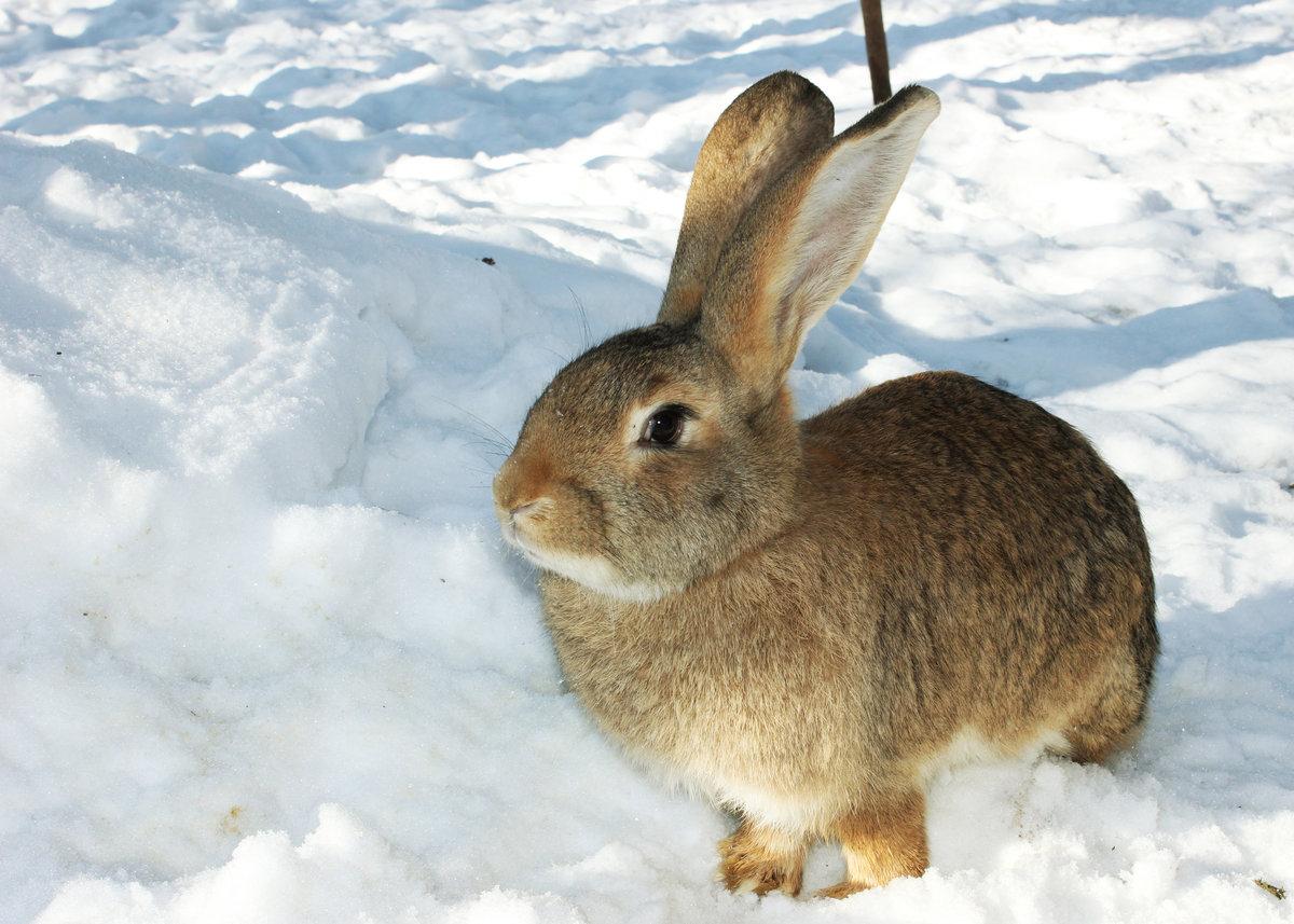 так фото заяц зайчата зимой если