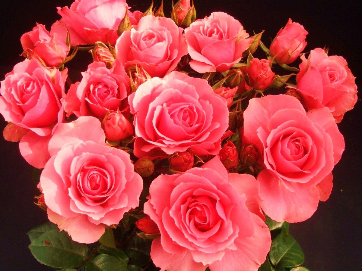 Розовые розы открытка с днем, картинки про