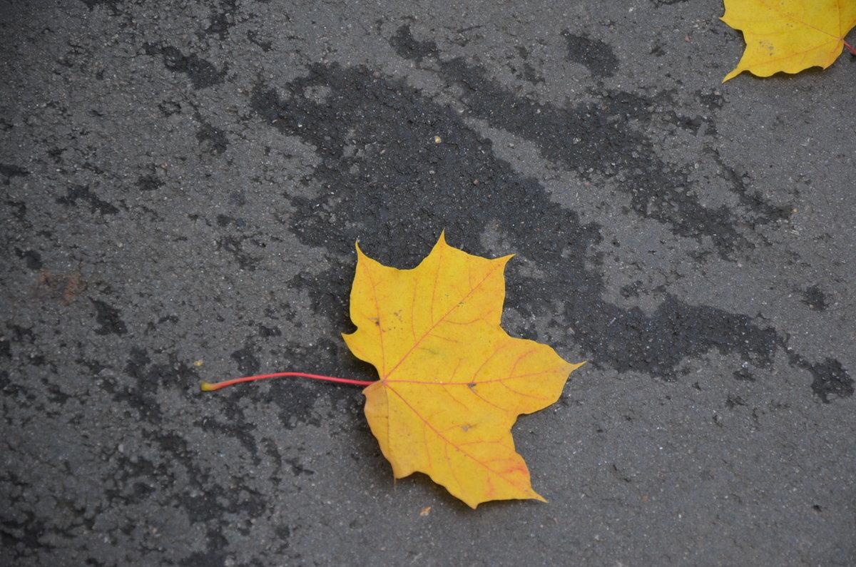 Одинокий кленовый лист картинки требовал