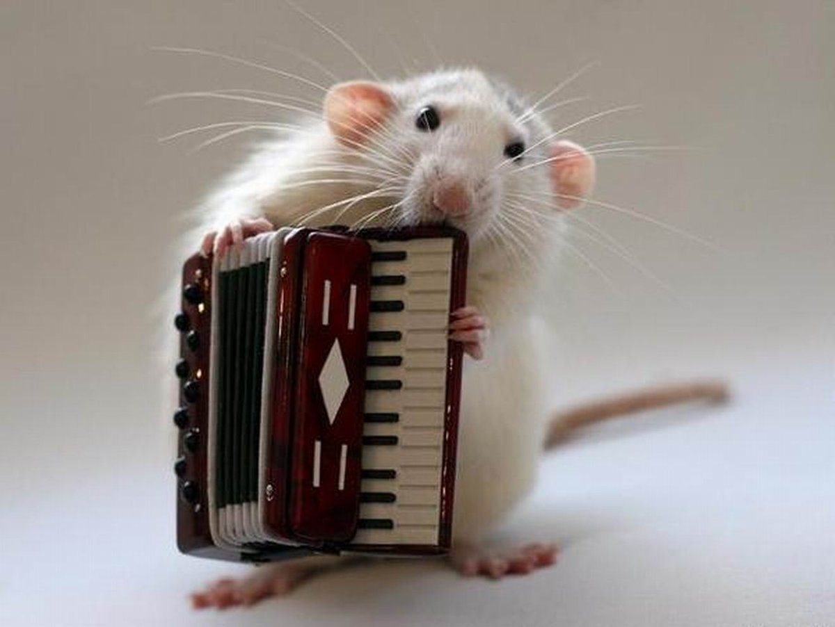 Картинка смешной мыши, хочу открытки