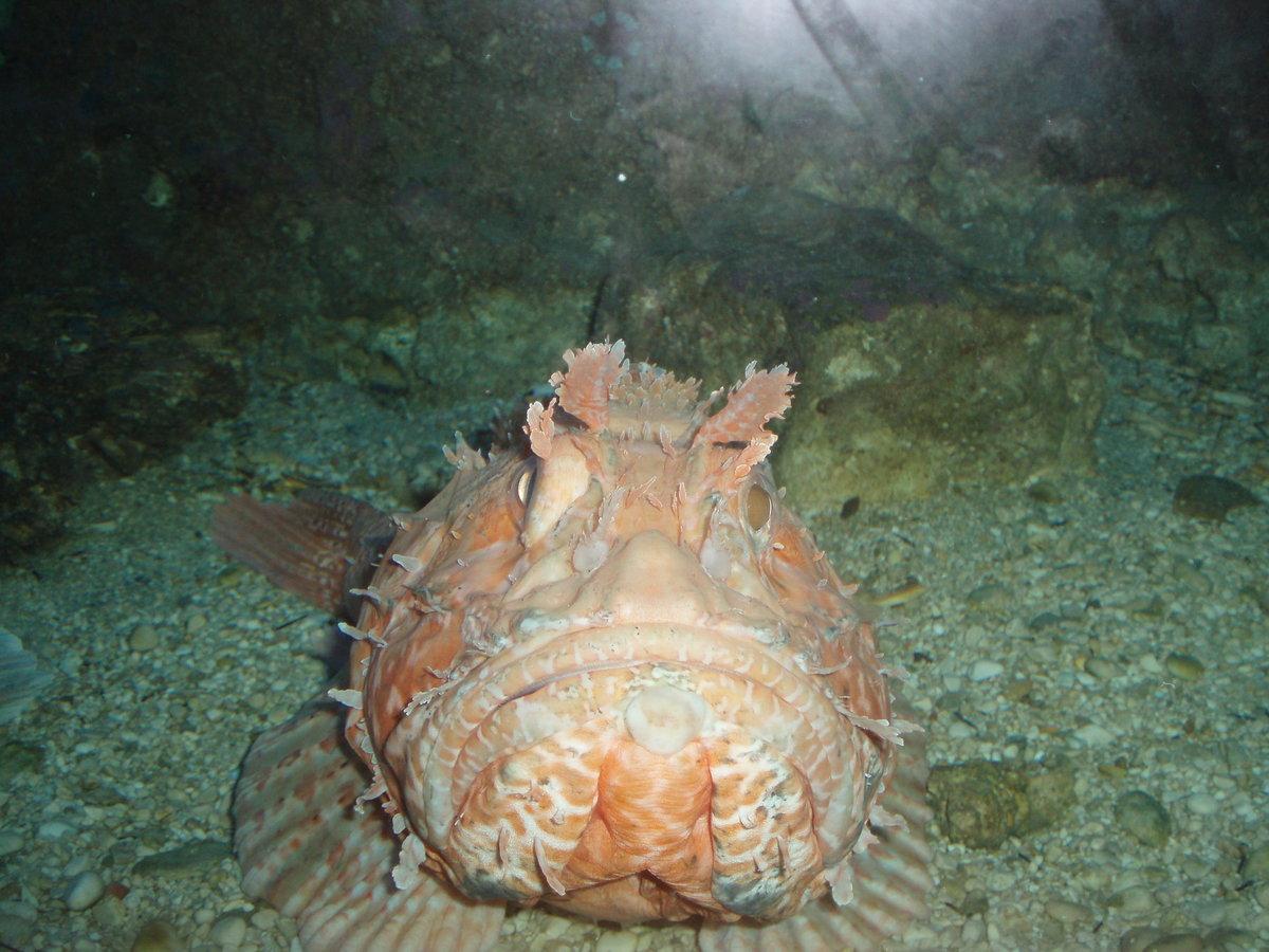 то, что рыбы адриатического моря фото с названиями недавно нефтекамске