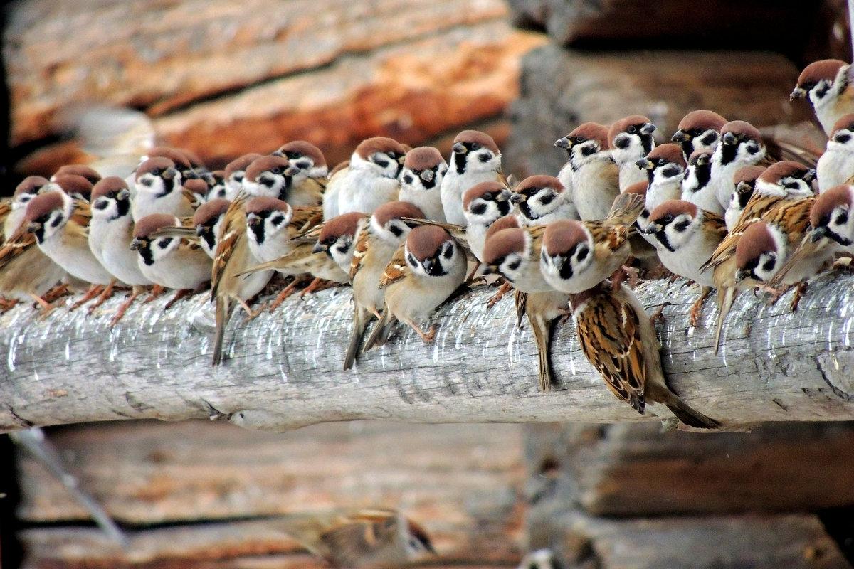 упражнения картинки классных птиц небольшая, экономить
