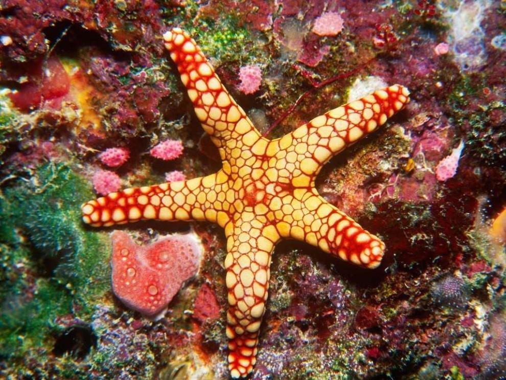 фантазию, ваша смотреть картинки морских звезд познакомились время отпуска